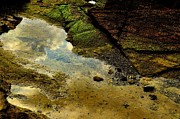 Tidal Pool Photos - Merging by Dean Harte