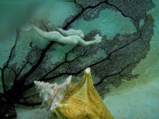 Barbara Kelley - Mermaid and Seashell