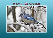 Michael Peychich - Merry Christmas Bluejay