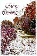 Christmas Card Greeting Cards - Merry Christmas Colours and Snow by Cathy  Beharriell