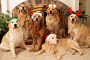 Dogs Art - Merry Christmas by Lawrence Christopher