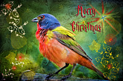 Holiday Greetings Posters - Merry Christmas Painted Bunting Poster by Bonnie Barry