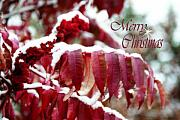 Christmas Card Greeting Cards - Merry Christmas Red Leaves  by Cathy  Beharriell