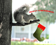 Squirrel Digital Art Metal Prints - Merry Christmas To All Metal Print by Adele Moscaritolo