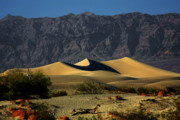 Mesquite Bush Posters - Mesquite Flat Dunes - Death Valley California Poster by Christine Till