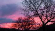 Tucson Art - Mesquite tree sunset by Elvira Butler