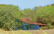 Ranching Art - Metal Barn at the Edge of Woods by Linda Phelps