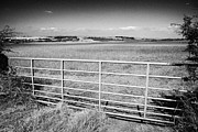 Lowlands Posters - metal gate to field in scottish lowlands farmland lothian Scotland Poster by Joe Fox