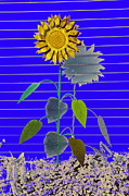 Metal Art Digital Art - Metal Sunflower by James Steele