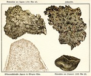 Quartet Prints - Meteorites, Historical Artwork Print by Detlev Van Ravenswaay