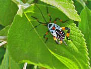 Immature Photos - Mexican Bug by Michael Peychich