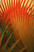 Garden Landscape Photo Posters - Mexican Palm Poster by Gwyn Newcombe