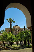 Fan Palm Framed Prints - Mezquita de Cordoba Framed Print by Sami Sarkis
