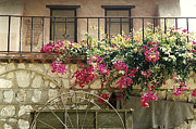 Bougainvilleas Prints - Mi Casa Print by Marilyn Wilson