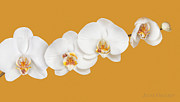 Anne Geddes Prints - Mia, Nakeeta, Mia & Phoenix in Moth Orchids Print by Anne Geddes