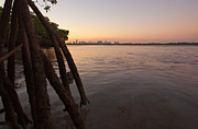 Miami Skyline Metal Prints - Miami and Mangroves Metal Print by Matt Tilghman