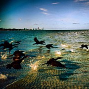 Birds Art - #miami #nature #birds #sea #beach #keys by Joel Lopez
