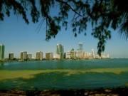 Oceanfront Metal Prints - Miami Skyline Metal Print by Monique Wegmueller
