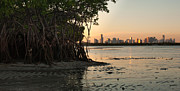 Miami Skyline Metal Prints - Miami with Mangroves Metal Print by Matt Tilghman