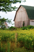 Old Fence Post Prints - Michigan Barn Print by Michael Peychich