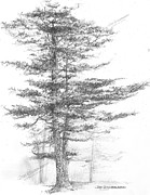 Jim Hubbard - Michigan-Eastern White Pine