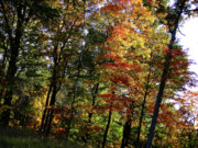 Michigan Fall Colors Posters - Michigan Fall Colors 10 Poster by Scott Hovind