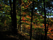 Michigan Fall Colors Posters - Michigan Fall Colors 4  Poster by Scott Hovind