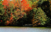 Michigan Fall Colors Posters - Michigan Fall Colors 5  Poster by Scott Hovind