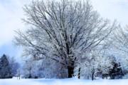 Scott Hovind - Michigan Winter 18