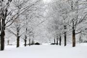 Scott Hovind - Michigan Winter 3