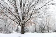 Scott Hovind - Michigan Winter