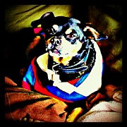 Petstagram Art - Mickey...my Newly Adopted Mini Pin by Mary Carter