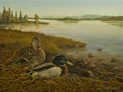 Mallards Paintings - Mid-Day Sunning by James Willoughby III