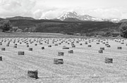 Hay Bales Framed Prints - Mid June Colorado Hay  and the Twin Peaks Longs and Meeker BW Framed Print by James Bo Insogna