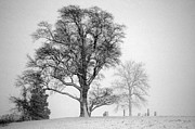 Mark Clifford - Mid Winter- Guardian Tree