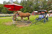 Carriage Horse Photos - Midday Snack by James Steele