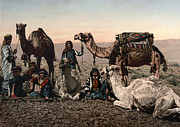 Camel Photos - Middle East: Travelers by Granger
