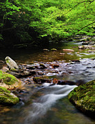 Spring Scenes Metal Prints - Middle Prong Little River spring Metal Print by Thomas Schoeller