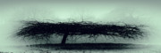 Winter Prints Digital Art Prints - Middlethorpe Tree In Gray And Green Panoramic Print by Tony Grider