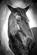 Horse Photography Prints - Midnight Dream Print by Kathy Jennings