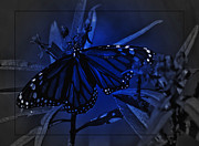 Milkweed Butterfly Posters - Midnight Monarch Poster by DigiArt Diaries by Vicky Browning