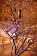 Snowy Night Metal Prints - Midnight Snow Metal Print by Ellen Andrews