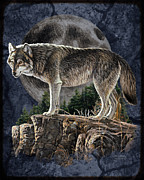 Bruce Painting Framed Prints - Midnight Wolf Framed Print by JQ Licensing