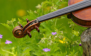 Violin Prints - Midsummer Flowers and Fiddle Print by Dagmar Ceki
