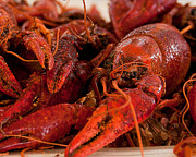 Crawfish Prints - Mighty but Tasty Mudbug Print by John Kain