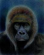 Monkeys Drawings - Mighty Gorilla by Arline Wagner