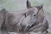 Pen And Ink Drawing Prints - Mildred the Moose Resting Print by Stella Sherman