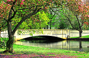 Cathy Leite - Milford Duck Pond Bridge