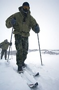 Sledge Training Prints - Military Arctic Survival Training Print by Louise Murray