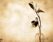 Black And White Photograph Prints - Milk Weed In A Bottle Print by Bob Orsillo